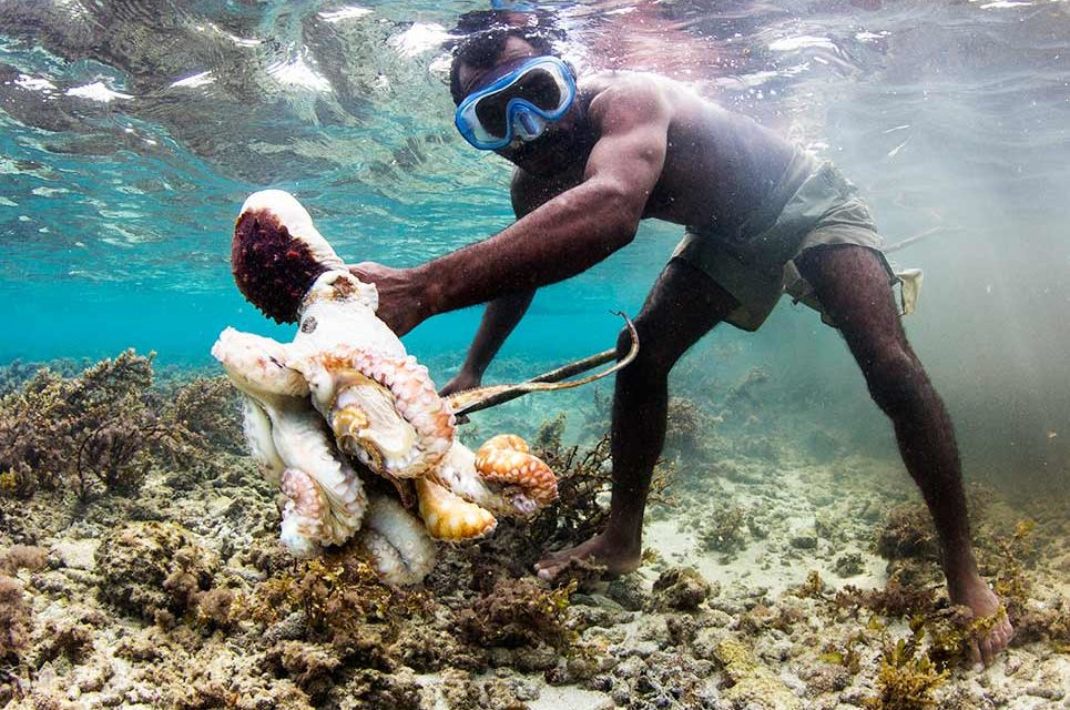 EP27: How Dr. Alasdair Harris is Rebuilding Communities with Tropical Fisheries