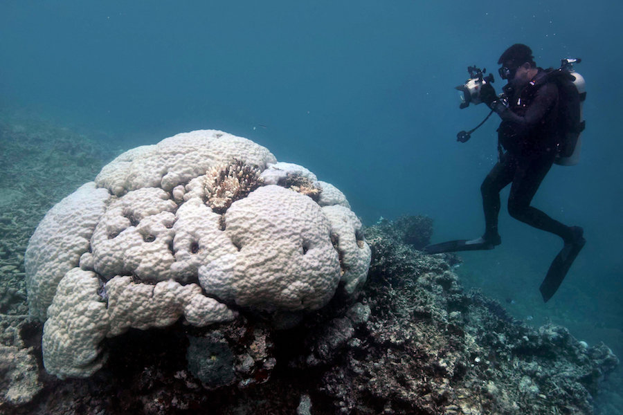 great barrier reef bleaching