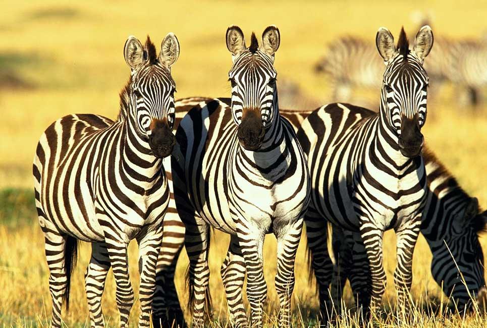 animal conservation change creator